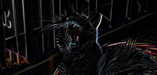 Andy-la-pantera-nera.jpg